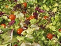 Voller Rahmenhintergrund des Salats - Archivbild Stockbild