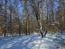 Voller Tag des Winters im Wald Lizenzfreie Stockbilder