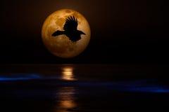 Volles Supermoon, schwarze Flugwesen-Raben-Ozean-Wellen stockfotos