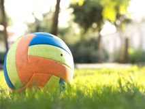 Volleyball ball standing on the grass. Volleyball ball on greenery field in park stock photo
