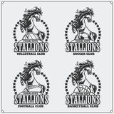 Volleyball, baseball, soccer and football logos and labels. Sport club emblems with horse. Royalty Free Stock Photos