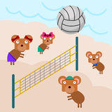 Volleyball bears Royalty Free Stock Photos