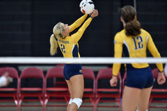 Volleyball 2015 de NCAA - Kent State et Morgan State Images stock
