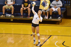 2015 volleyball de NCAA - le Texas @ WVU Image stock