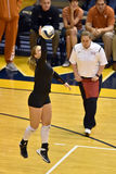 2015 volleyball de NCAA - le Texas @ WVU Photographie stock libre de droits