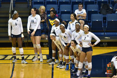 2015 volleyball de NCAA - le Texas @ WVU Photos stock