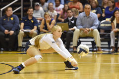 2015 volleyball de NCAA - le Texas @ WVU Photo stock