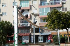 Volleyball net with four pigeons on it in front of a multistory residential building royalty free stock image