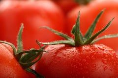 Vollkommene rote nasse Tomaten mit Tomaten Lizenzfreies Stockfoto