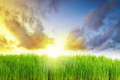 Vollkommene Wiese am Sonnenaufgang Lizenzfreies Stockbild