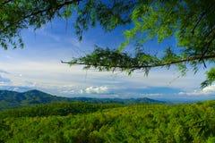 Vollkommener Bambuswald Stockbild