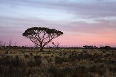 Vollkommener Baum Lizenzfreies Stockfoto
