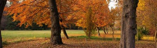Vollkommener Herbst Lizenzfreies Stockbild