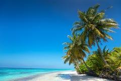 Vollkommener tropischer Inselparadiesstrand Stockfoto