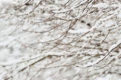 Vollkommener Winter-Tag Stockfotos
