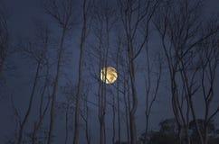 Vollmond am Abend der Herbstsaison Stockbilder