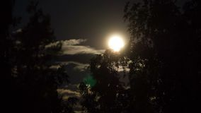 Vollmond bewegt sich in den nächtlichen Himmel durch dunkle Wolken und Bäume Timelapse stock footage