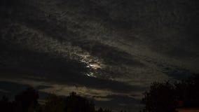 Vollmond bewegt sich in den nächtlichen Himmel durch dunkle Wolken und Bäume Timelapse stock video