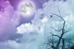 Vollmond im bewölkten Himmel mit bloßen Niederlassungen und kleinem Vogel Die Mondbildhöflichkeit NASA Stockfotografie