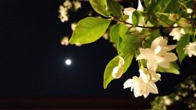 Vollmond mit Blume stockbild