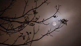 Vollmondnacht Stockfotos