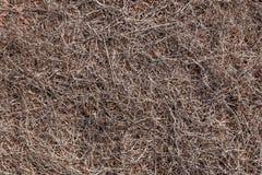 Vollständig ausgetrockneter Boden von Ponta tut Rosto Madeira Lizenzfreies Stockfoto