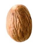 Vollständige Muskatnuts Stockfoto
