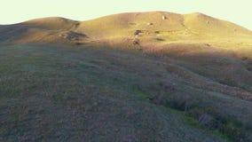 Volo aereo del fuco sopra la valle con le colline alla scossa di sera dal vento archivi video