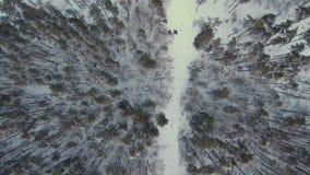Volo aereo sopra il sentiero forestale video d archivio