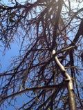 Volo al cielo blu fotografia stock libera da diritti