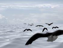 Volo away Fotografia Stock Libera da Diritti