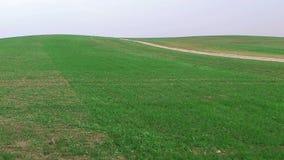 Volo basso sopra le colline verdi con la strada non asfaltata, vista aerea video d archivio