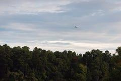 Volo bianco dell'egretta sopra gli alberi verdi alla luce di primo mattino fotografia stock