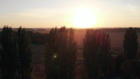Volo circolare della macchina fotografica sopra il campo al tramonto