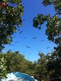 Volo dagli alberi Fotografia Stock Libera da Diritti