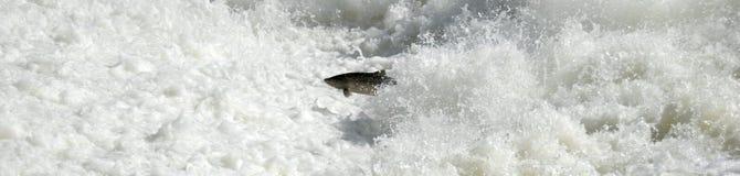 Volo dei pesci Fotografia Stock Libera da Diritti