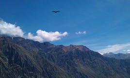 Volo del condor sopra le montagne fotografia stock libera da diritti