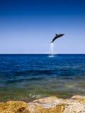 Volo del delfino Fotografia Stock