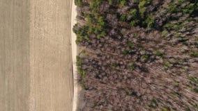 Volo del fuco sopra la foresta di caduta Foglie ed alberi della primavera archivi video