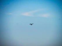 Volo del fuco sul cielo fotografia stock libera da diritti