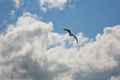 Volo del gabbiano in cielo nuvoloso blu fotografia stock