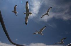 Volo del gabbiano, contro il sole Immagine Stock Libera da Diritti