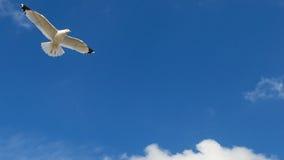 Volo del gabbiano contro un bello cielo blu immagini stock libere da diritti