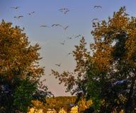 Volo del gabbiano dal lago fotografia stock
