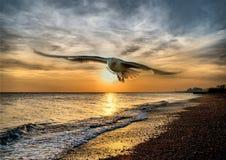 Volo del gabbiano di Hdr a Brighton Fotografie Stock