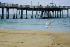 Volo del gabbiano fra il pilastro alla spiaggia fotografia stock