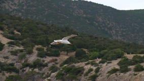Volo del gabbiano nel cielo stock footage