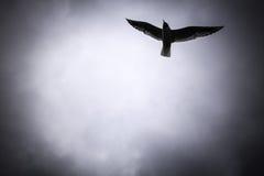 Volo del gabbiano nel cielo Fotografie Stock Libere da Diritti