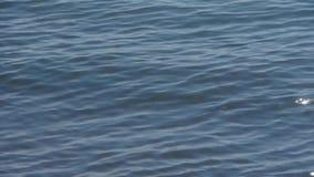 Volo del gabbiano nel mare stock footage