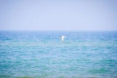 Volo del gabbiano sopra il mare Immagini Stock
